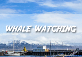 Whale watching in Iceland with Elding