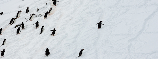 The Penguin Highway