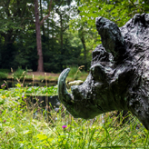Statue of a Warthog at Morton's Pond
