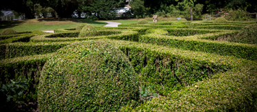 Maze outside the Cottage Garden