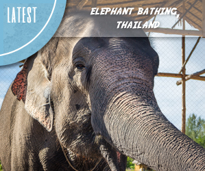 Elephant bathing with Eco Khao Lak in Thailand