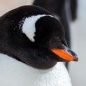 Photo Essay - Antarctic Wildlife