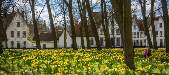 Beautiful Daffodils flowering in the peaceful Begijnhof square