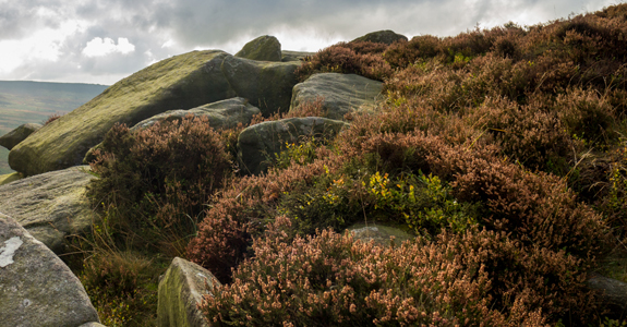 Autumn coloured Heather and Moss cover the rocks and peaks